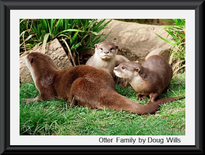 Otter Family 500