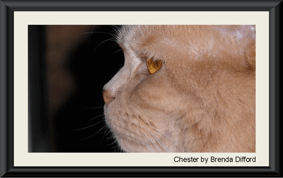 Chester by Brenda Difford ..575h