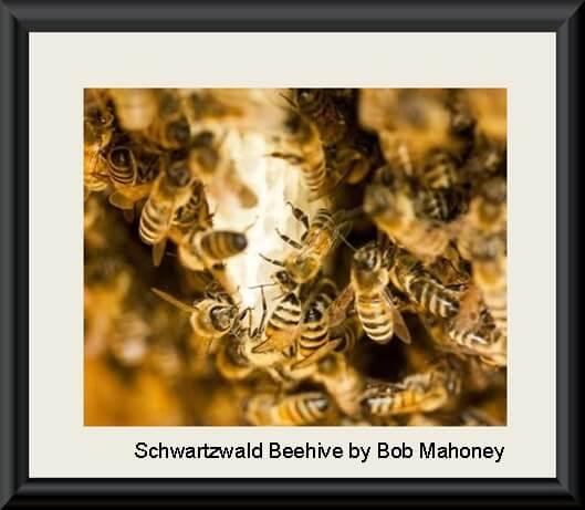 Schwartzwald Beehive by Bob Mahoney 458..
