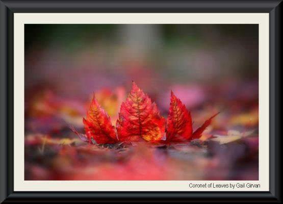Leaves GG